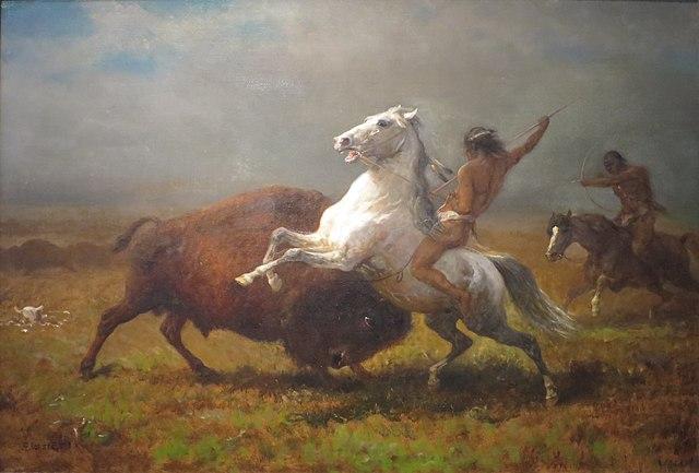 Na prériách (amerických veľkých lúkach) lovili indiáni bizóny.