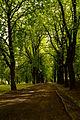 Aleja kasztanowa w parku miejskim im. H.Sienkiewicza we Włocławku.JPG
