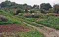 Allotments at Longborough - geograph.org.uk - 573848.jpg