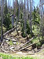 Alpine Pond Trail at Cedar Breaks - panoramio (12).jpg