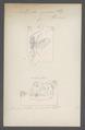 Amblynotus - Print - Iconographia Zoologica - Special Collections University of Amsterdam - UBAINV0274 047 03 0056.tif