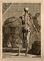 An écorché figure, back view, with left arm extended, Wellcome V0008360.jpg