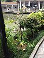 An historical garden plant.jpg