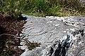 Ancient Rock Art - geograph.org.uk - 1948471.jpg