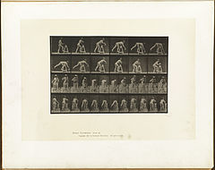 Animal locomotion. Plate 203 (Boston Public Library).jpg