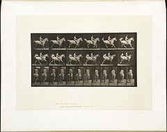 Animal locomotion. Plate 622 (Boston Public Library).jpg
