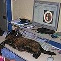 Animal testing 3.jpg