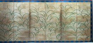 Pampas Grasses