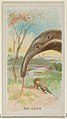 Anteater, from the Wild Animals of the World series (N25) for Allen & Ginter Cigarettes MET DP836474.jpg