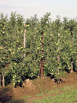 Appelboomgaard.jpg