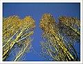 April Parc Natural Mundenhof Freiburg - Master Botany Photography 2013 - panoramio.jpg