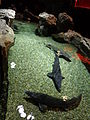Aquarium Genoa 46.JPG