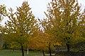 Arboles Amarillos - panoramio.jpg