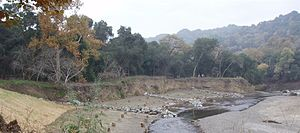 Arroyo de la Laguna - Alameda County Resource Conservation District restoration project in lower Arroyo de la Laguna will re-establish riparian terraces in eroded channel.