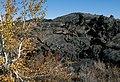Aspen ( Populus Tremuloides) on lava (26d864d8-5d0a-4726-a7bb-e2c617fb1cf5).jpg