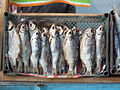 Astrakhan Smoked Fish Market 08.jpg