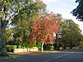 Autumn in Northumberland Avenue - geograph.org.uk - 90407.jpg