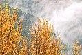 Autumn mist (4266999879).jpg