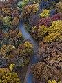 Autumn road from above (Unsplash).jpg