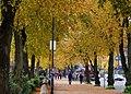 Autumn trees, Belfast - geograph.org.uk - 1538025.jpg