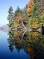 Autumnal Reflections (46432932).jpeg