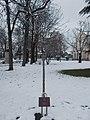 Béla Komjáthy memorial tree, Pestújhely Square, 2018 Pestújhely.jpg