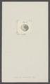Balanus punctatus - - Print - Iconographia Zoologica - Special Collections University of Amsterdam - UBAINV0274 101 02 0021.tif