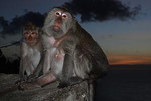 Bali – Uluwatu Sunset Temple (2688001517)