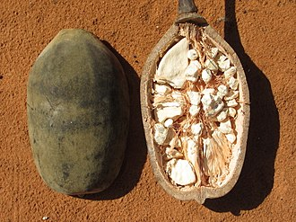 Adansonia - The cut fruit from Mozambique