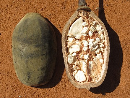 The cut fruit from Mozambique Baobab - fruit (8750413322).jpg