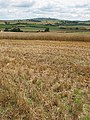 Barley harvest above Weston-under-Penyard - geograph.org.uk - 508885.jpg