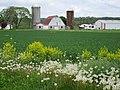 Barn on Daysville Road - panoramio.jpg