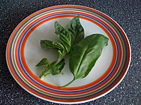 Basil leaves on plate.JPG