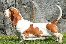 Dog Leg Paint Brush
