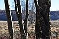 Baumgruppe im Schopflocher Moor.jpg