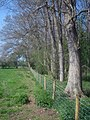 Bees nest near Scatterbrain Farm - 1 - geograph.org.uk - 1289435.jpg