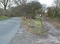 Beverley Clump - geograph.org.uk - 711619.jpg