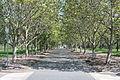 Bicentennial Park, Homebush Bay.JPG