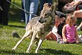 Big Run Wolf Ranch Open House - 7820515824.jpg