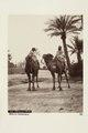"""Bild från familjen von Hallwyls resa genom Algeriet och Tunisien, 1889-1890. """"Biskra. Kameler."""" - Hallwylska museet - 91950.tif"""