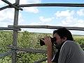Bird watch at a tower in Sian Ka'an - panoramio.jpg