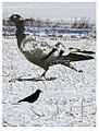 Birds, right or wrong (3195085310).jpg