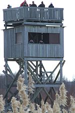 Birders using a tower hide to gain views over foreground vegetation. Bay of Liminka, south of Oulu, Finland.