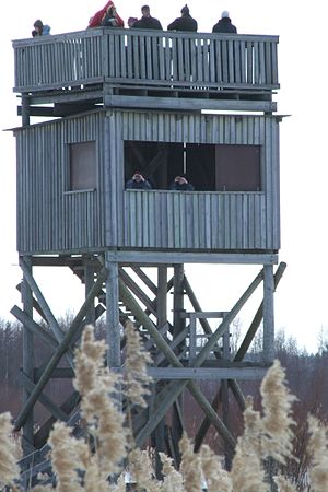 Birdwatchers in a viewing tower in the Bay of ...
