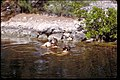 Biscayne National Park, Florida (ce927b40-c966-40f2-9d7c-925cb9210b17).jpg