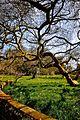 Blickling Hall, Gardens and Park (4514845938).jpg