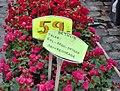 Blomstermarked på Stortorvet (4688460617).jpg