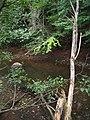Bloomfield Provincial Park IMG 8163 (1849013834).jpg