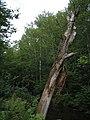 Bloomfield Provincial Park IMG 8242 (1848217489).jpg