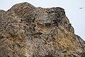 Bluffs at Sutro Baths, San Francisco (35574884512).jpg